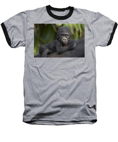 Western Lowland Gorilla Gorilla Gorilla Baseball T-Shirt by San Diego Zoo