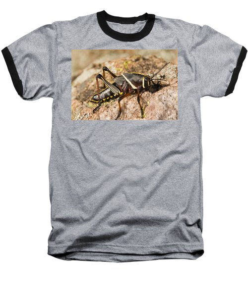 A Colorful Lubber Grasshopper Baseball T-Shirt by Jack Goldfarb