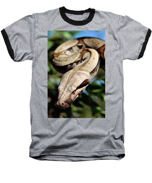 Boa Constrictor Boa Constrictor Baseball T-Shirt by Claus Meyer