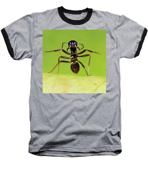Japanese Slave-making Ant Polyergus Baseball T-Shirt by Satoshi Kuribayashi