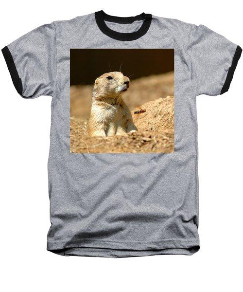 Prarie Dog Bee Alert Baseball T-Shirt by LeeAnn McLaneGoetz McLaneGoetzStudioLLCcom