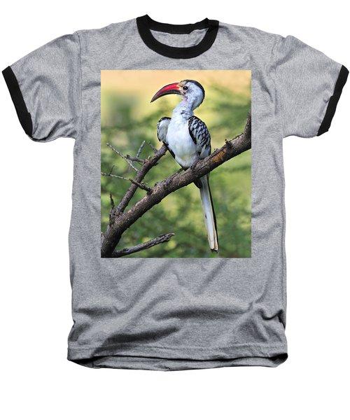 Red-billed Hornbill Baseball T-Shirt by Tony Beck