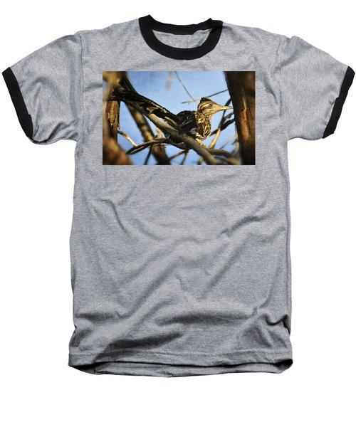 Roadrunner Up A Tree Baseball T-Shirt by Saija  Lehtonen