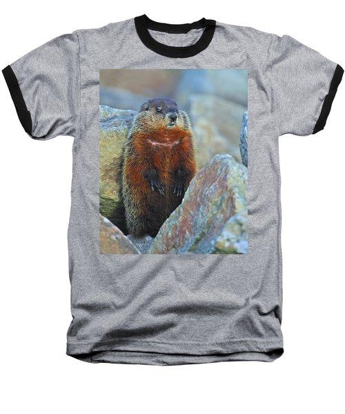 Woodchuck Baseball T-Shirt by Tony Beck