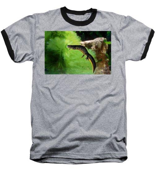 Alpine Newt Triturus Alpestris Baseball T-Shirt by Gerard Lacz