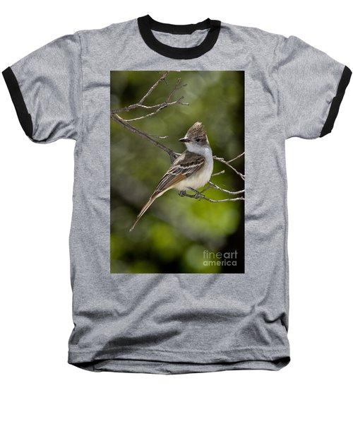 Ash-throated Flycatcher Baseball T-Shirt by Anthony Mercieca