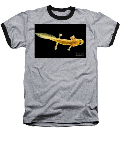 California Giant Salamander Larva Baseball T-Shirt by Dant� Fenolio