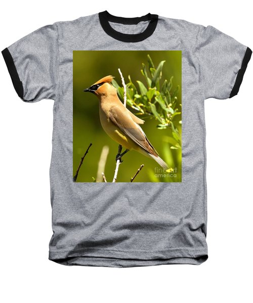 Cedar Waxwing Closeup Baseball T-Shirt by Adam Jewell