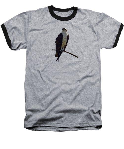 Osprey Baseball T-Shirt by Deborah Good