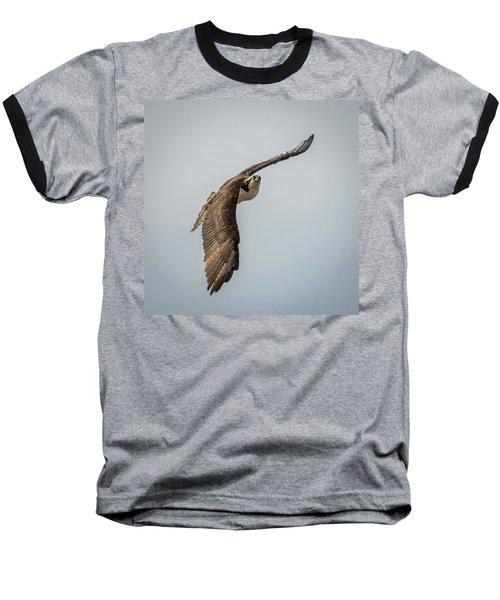 Osprey In Flight Baseball T-Shirt by Paul Freidlund