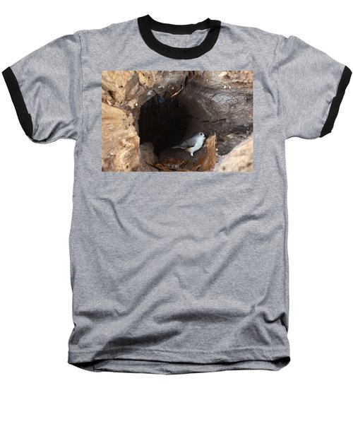 Tufted Titmouse In A Log Baseball T-Shirt by Ted Kinsman
