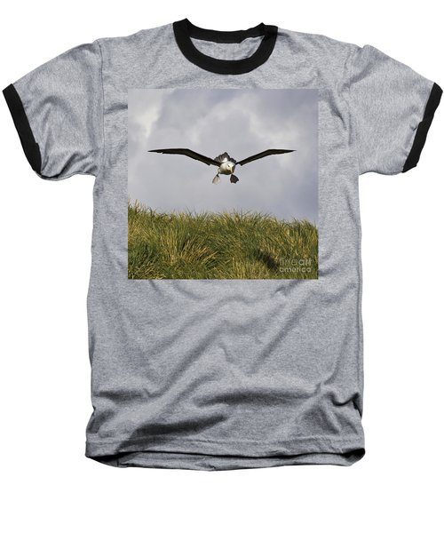 Black-browed Albatross Baseball T-Shirt by Jean-Louis Klein & Marie-Luce Hubert