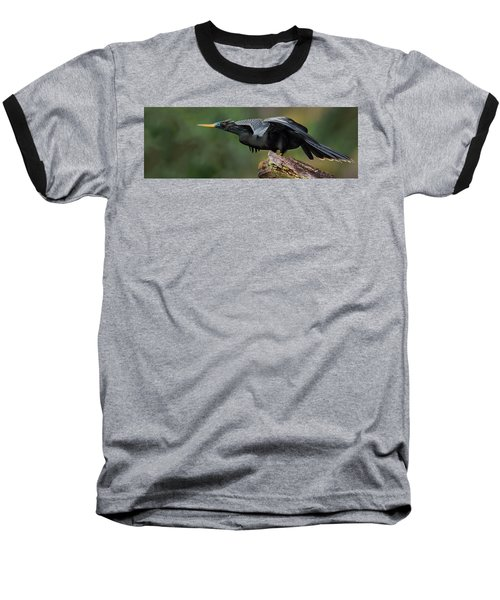 Anhinga Anhinga Anhinga, Costa Rica Baseball T-Shirt by Panoramic Images