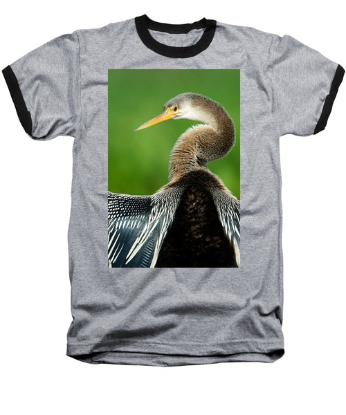 Anhinga Anhinga Anhinga, Pantanal Baseball T-Shirt by Panoramic Images