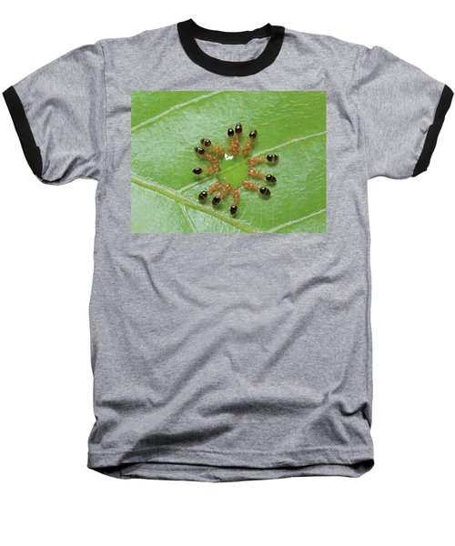Ant Monomorium Intrudens Group Drinking Baseball T-Shirt by Takashi Shinkai