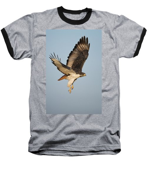 Augur Buzzard Buteo Augur Flying Baseball T-Shirt by Panoramic Images