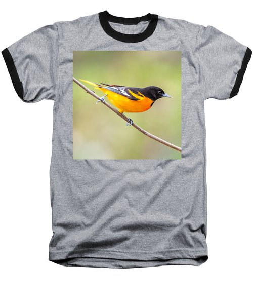 Baltimore Oriole Baseball T-Shirt by Paul Freidlund