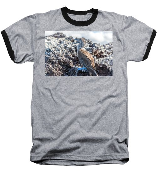 Blue Footed Booby Baseball T-Shirt by Jess Kraft