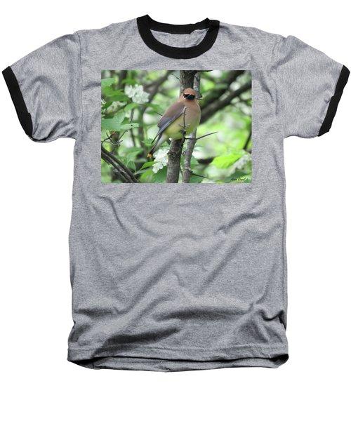Cedar Wax Wing Baseball T-Shirt by Alison Gimpel
