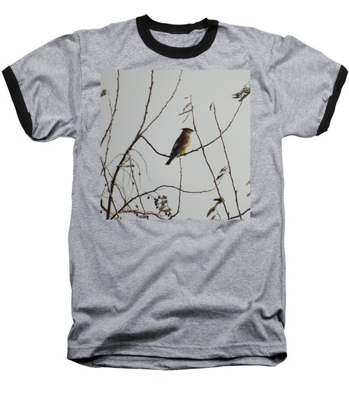 Cedar Wax Wing In Tree Baseball T-Shirt by Kenneth Willis