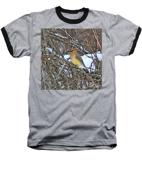 Cedar Wax Wing Baseball T-Shirt by Robert Pearson
