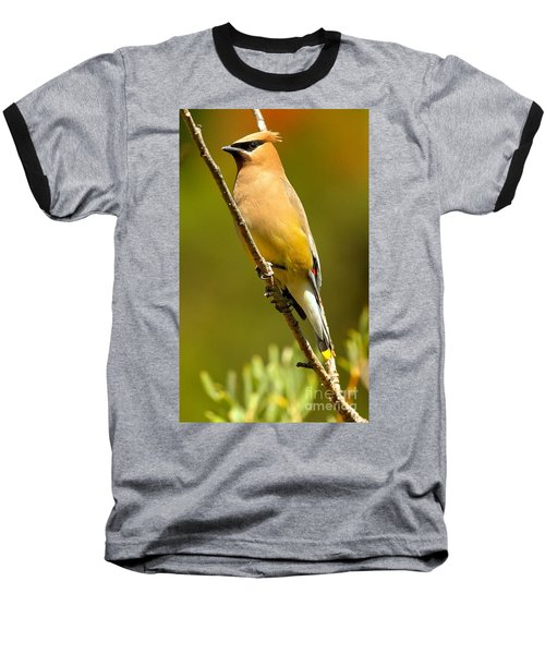 Cedar Waxwing Baseball T-Shirt by Adam Jewell