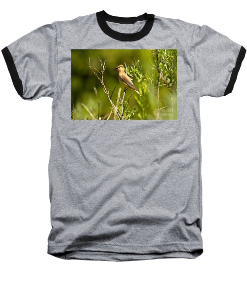 Cedar Waxwing At Glacier Baseball T-Shirt by Adam Jewell
