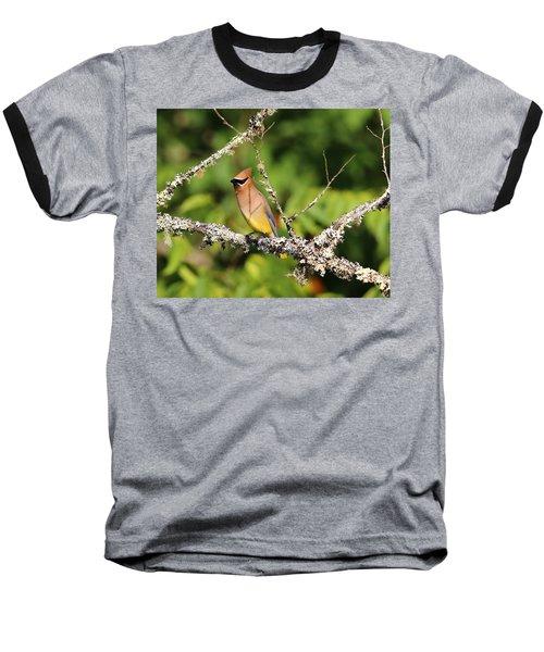 Cedar Waxwing  Baseball T-Shirt by Carol R Montoya