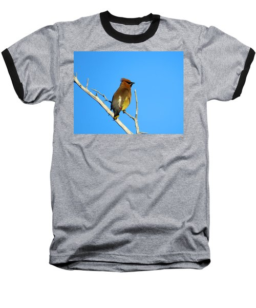 Cedar Waxwing Baseball T-Shirt by Dianne Cowen
