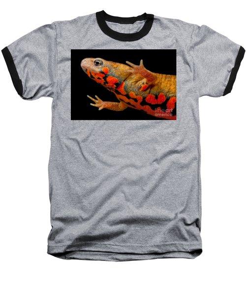 Chuxiong Fire Belly Newt Baseball T-Shirt by Dant� Fenolio