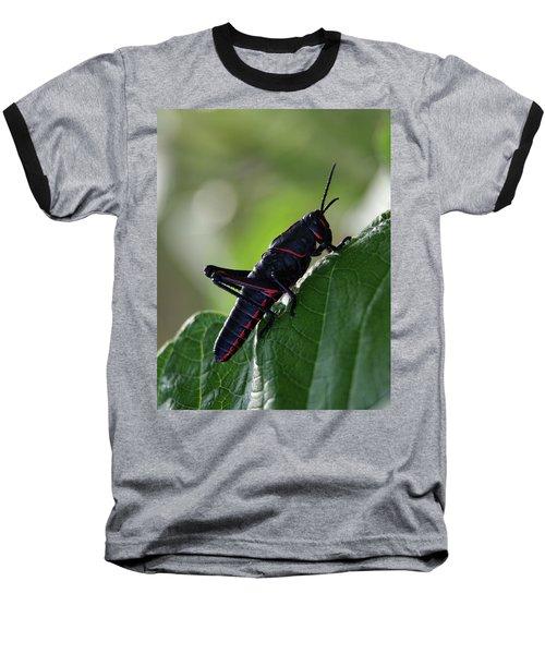 Eastern Lubber Grasshopper Baseball T-Shirt by Richard Rizzo