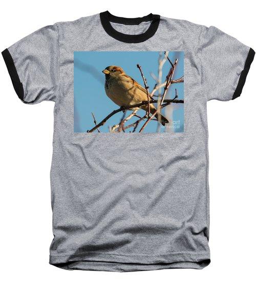 Female House Sparrow Baseball T-Shirt by Mike Dawson