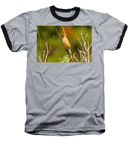 Fishercap Cedar Waxwing Baseball T-Shirt by Adam Jewell