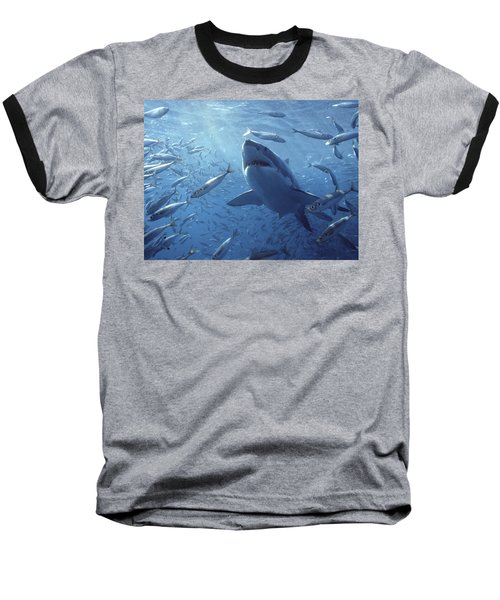 Great White Shark Carcharodon Baseball T-Shirt by Mike Parry