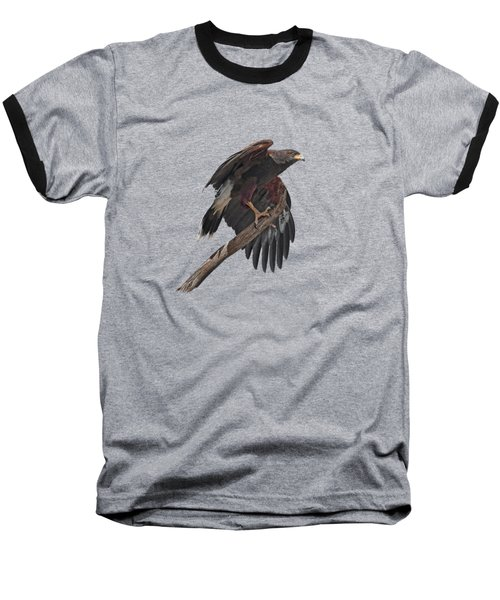 Harris Hawk - Transparent Baseball T-Shirt by Nikolyn McDonald
