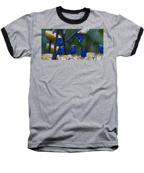 Honeycreeper Baseball T-Shirt by Betsy Knapp