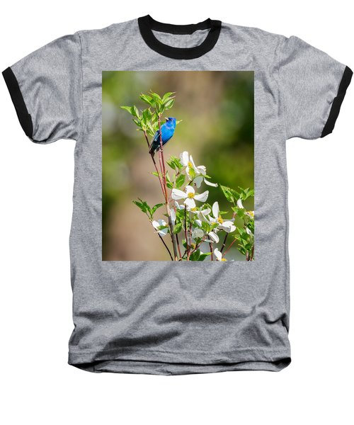 Indigo Bunting In Flowering Dogwood Baseball T-Shirt by Bill Wakeley
