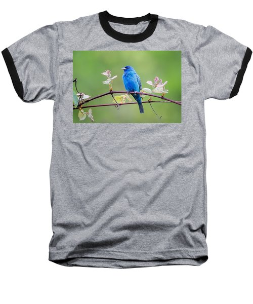 Indigo Bunting Perched Baseball T-Shirt by Bill Wakeley
