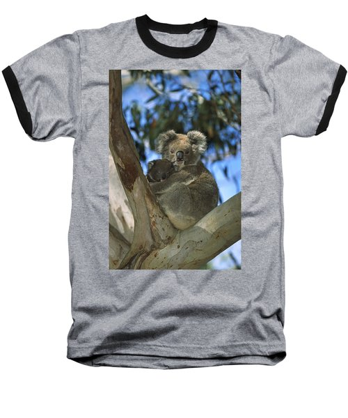 Koala Phascolarctos Cinereus Mother Baseball T-Shirt by Konrad Wothe