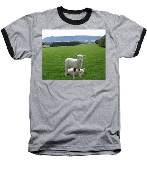 Lambs In Pasture Baseball T-Shirt by Dominic Yannarella