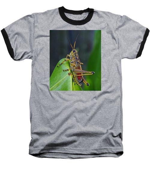 Lubber Grasshopper Baseball T-Shirt by Richard Rizzo