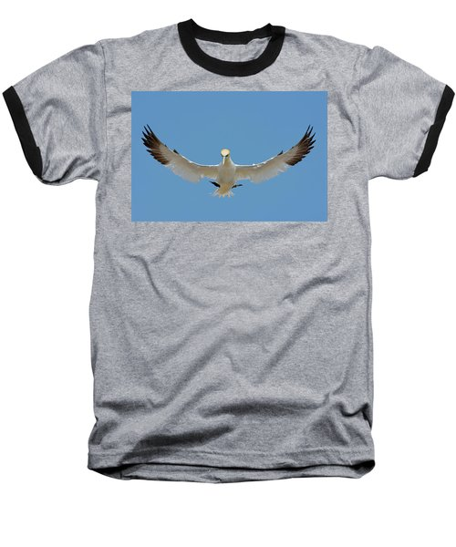 Maestro Baseball T-Shirt by Tony Beck