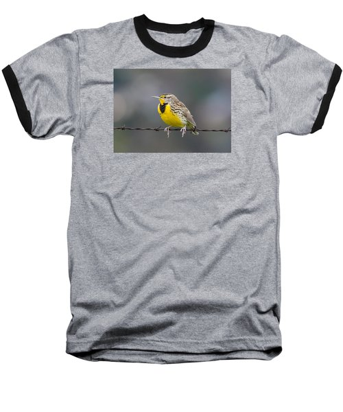 Meadowlark On Barbed Wire Baseball T-Shirt by Marc Crumpler