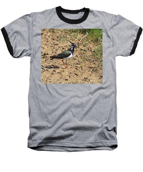 Northern Lapwing Baseball T-Shirt by Louise Heusinkveld
