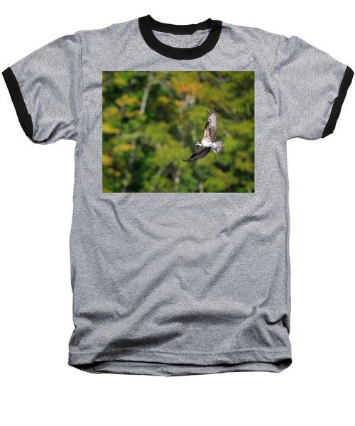 Osprey Baseball T-Shirt by Bill Wakeley