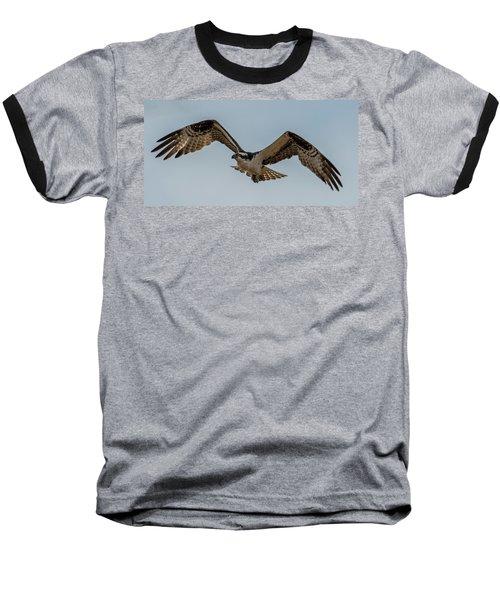 Osprey Flying Baseball T-Shirt by Paul Freidlund