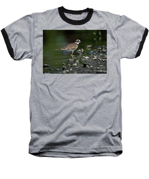 Killdeer  Baseball T-Shirt by Douglas Stucky