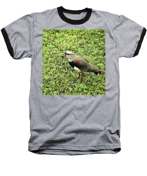 Southern Lapwing Baseball T-Shirt by Norman Johnson