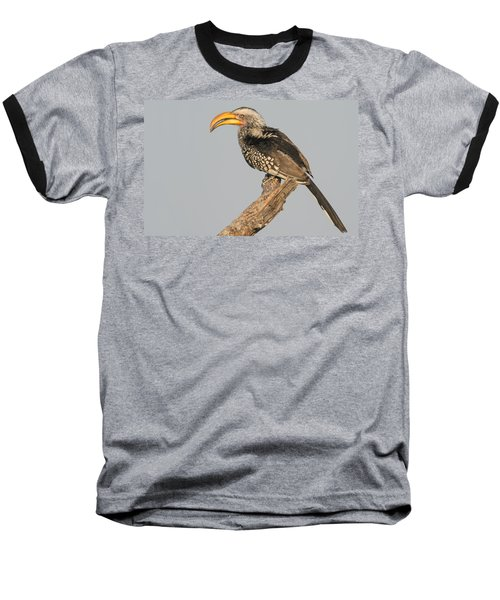 Southern Yellow-billed Hornbill Tockus Baseball T-Shirt by Panoramic Images