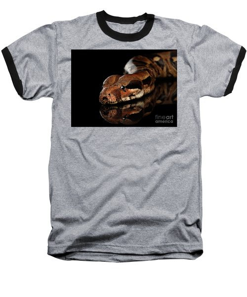 The Boa Constrictors, Isolated On Black Background Baseball T-Shirt by Sergey Taran